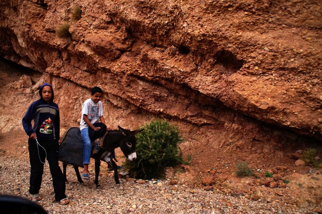 Maroko oslicek
