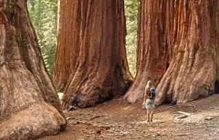 yosemite-national-park-mariposa-grove-redwoods