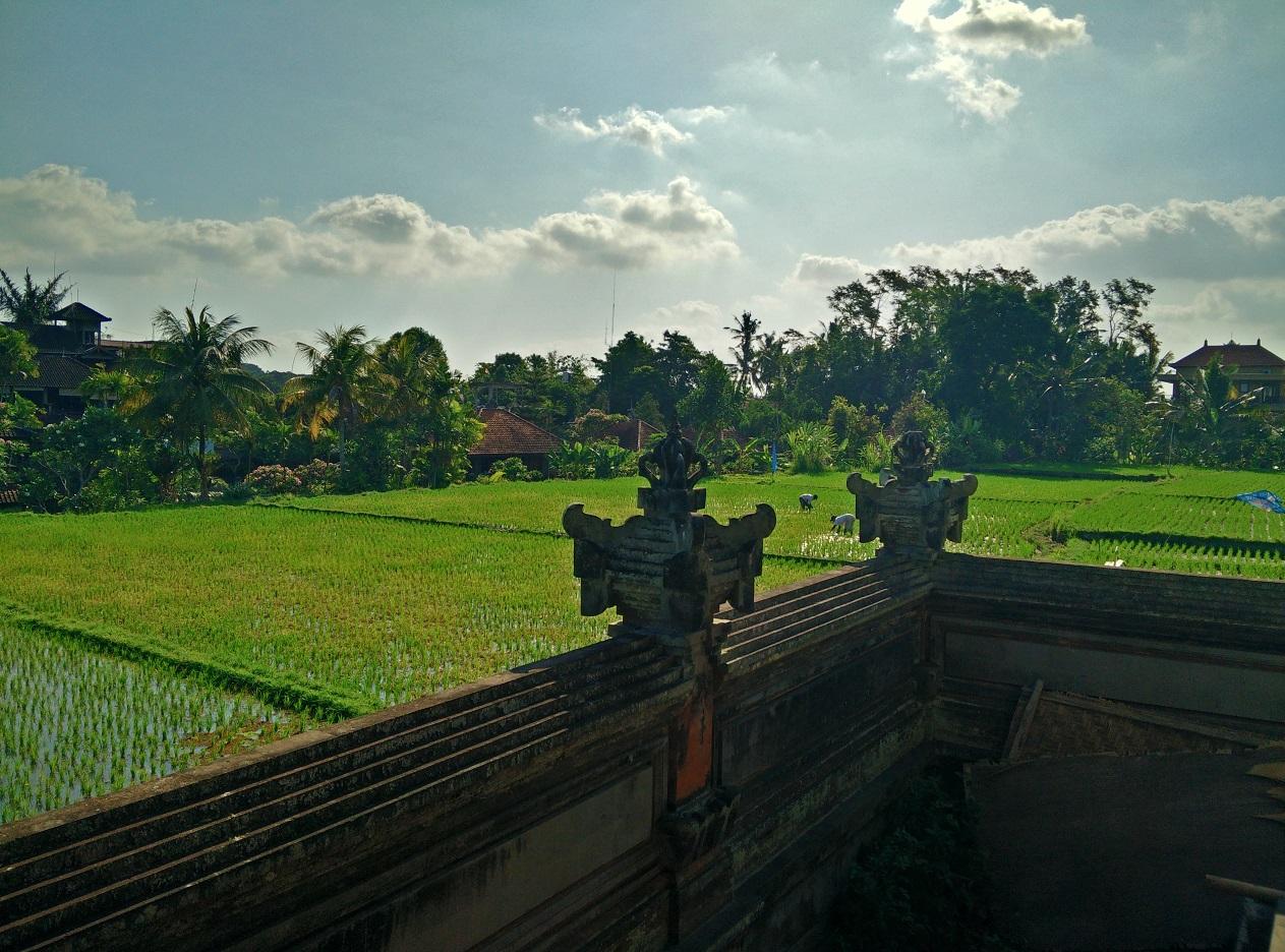 Riževo polje v mestecu Ubud