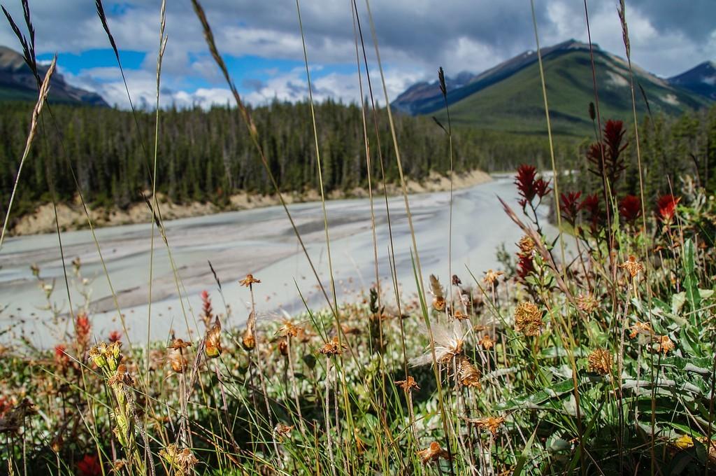 čudovita ledeniška dolina narodnrga parka Jasper