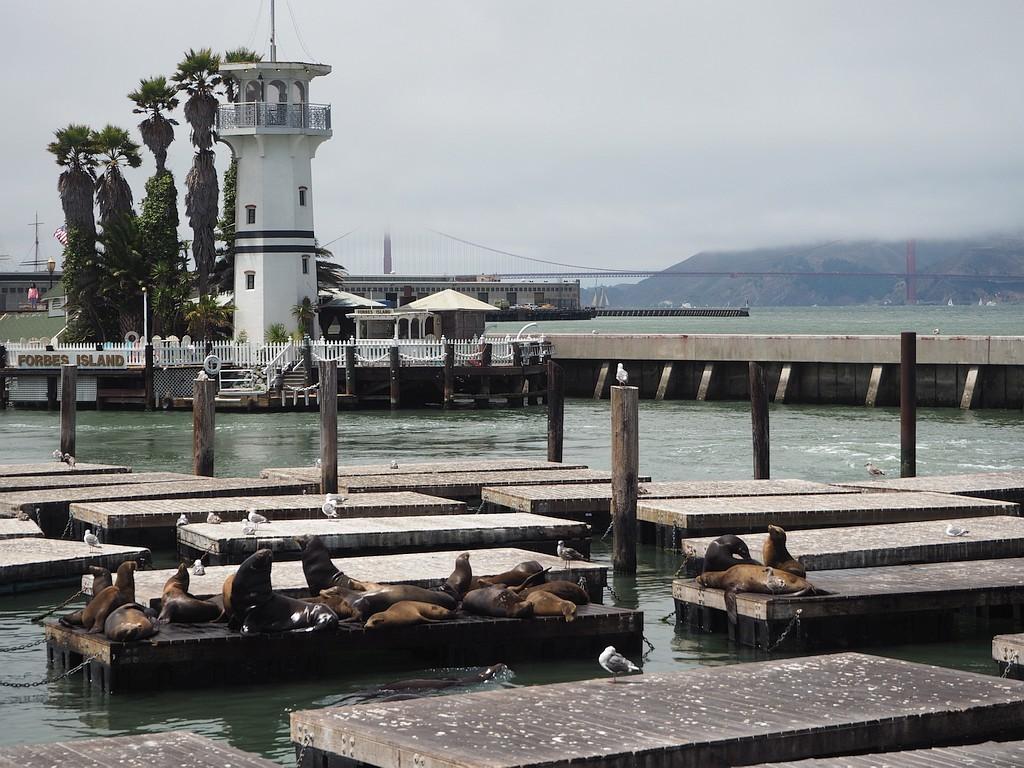 morski levi na Pier 39
