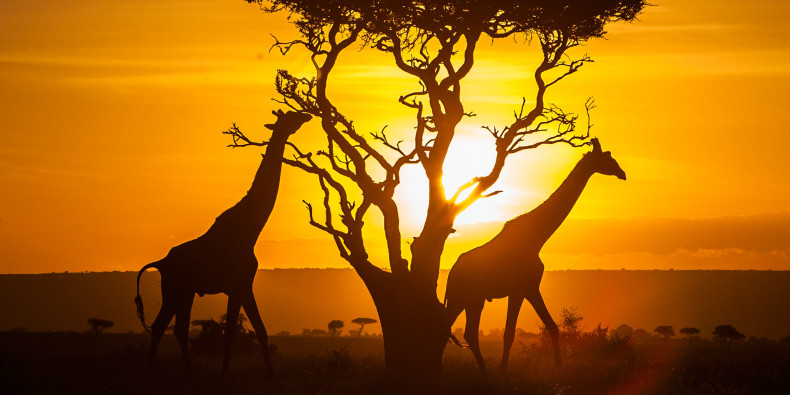 kenija-naslovna